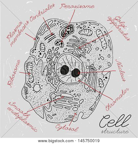 Beautiful handdrawn cell drawing in dark grey and white colours. Vector cell structure illustration with elements names in unique artistic style on a textured background. Biology creative concept.