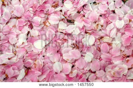 Cherry Blossom Petal Confetti