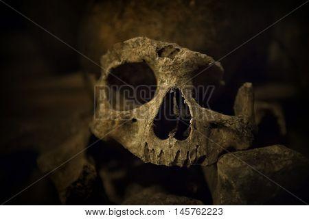 Skulls and bones in Paris Catacombs, close up