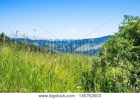 Amazing fresh green lawn full of plants and flowers with the far off view on the Pyrenees mountains, in the province of Girona, Alp, Catalunya, Spain