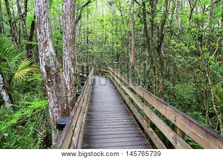 Boardwalk In A Swampy Area Of Florida
