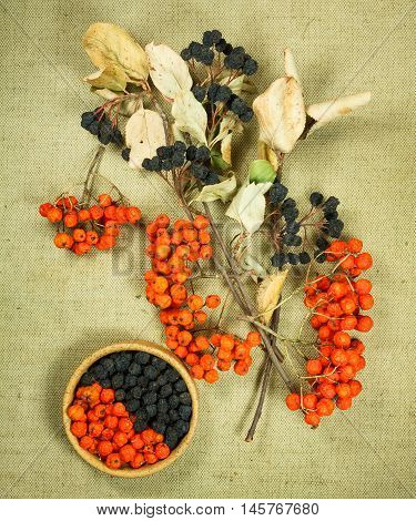 Chokeberry rowanberry. Dried herbs for use in alternative medicine spa herbal cosmetics herbal medicine preparing infusions decoctions tinctures powders ointments butter tea bath.