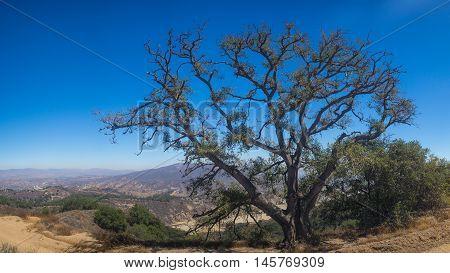 Overhanging Tree On California Mountain