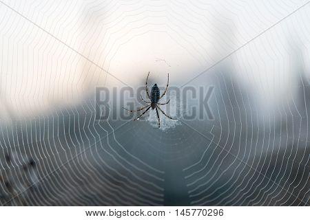 The spider web (cobweb) geometry closeup background.