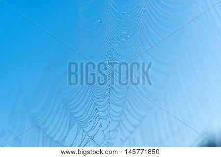 spider web or cobweb with water drops after rain against a blue sky selective focus and shallow depth of field