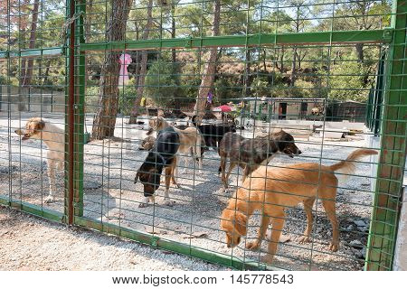 Homeless dogs in a big shelter house
