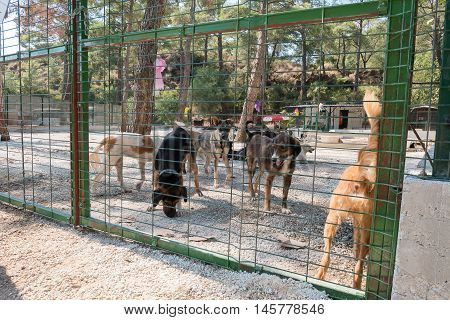 Homeless dogs in a big shelter cage