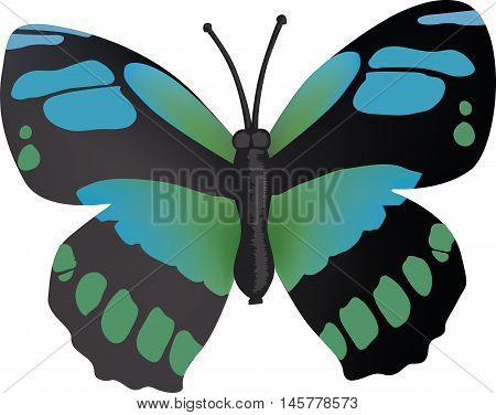 Sweet black blue and green butterfly vector, illustration drawing
