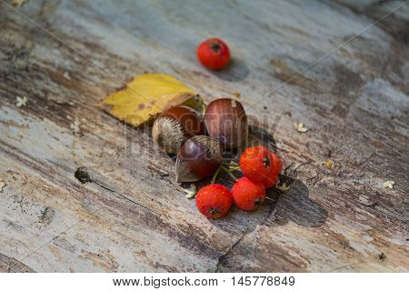 Hazelnuts and red viburnum lie on a wooden surface. Nature