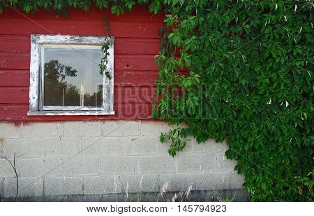 An old and weathered red wooden building with overgrown greenery.