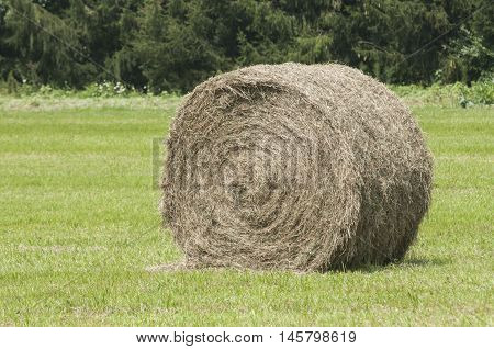 Hay roll bale on harvested field in summer