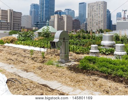 Urban Farm: Growing vegetables on roof of urban building