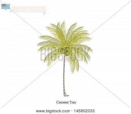 Tuvalu Tree Illustration of Coconut Tree. The Common Tree of Tuvalu
