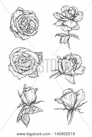 Roses buds icons. Vector pencil sketch flowers with leaves on stem. Graphic emblems for tattoo, decoration