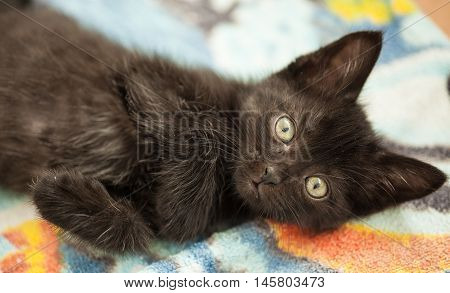 beautiful black cat with green eyes lying on floor