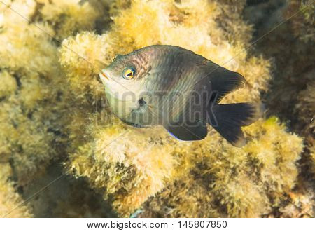 Fish. Marine Life in the Red Sea. Egypt