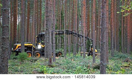 JAMSA, FINLAND - SEPTEMBER 2, 2016: Operator harvests young forest with Ponsse Harvester Scorpion King in a work demonstration on the heavy machinery exhibition FinnMETKO 2016 in Jamsa Finland.