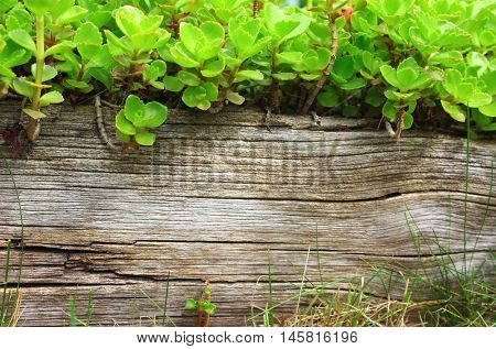 Summer background with old wooden board, grass and green leaves