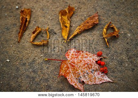 Word love laid out by autumn leaves on the pavement