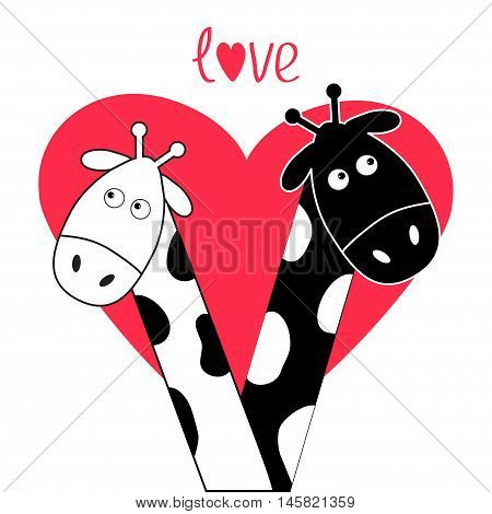 Cute cartoon black white giraffe boy and girl Big heart. Camelopard couple on date. Funny character set. Long neck. . Happy family. Word Love Greeting card. Flat design. Isolated. Vector