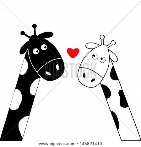 Cute cartoon black white giraffe boy and girl heart. Camelopard couple on date. Funny character set. Long neck. . Happy family. Love greeting card with little hearts. Flat design. Isolated. Vector