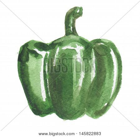 Watercolor green bell pepper on white background. Healthy and fresh vegetable with vitamins. Bright colorful bell pepper.