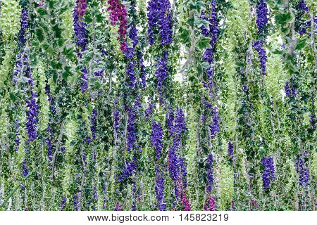 Background of blooming lupine flowers and creeping ivy hanging vertically