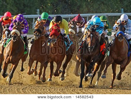 Thoroughbred Horses Head Down The Homestretch