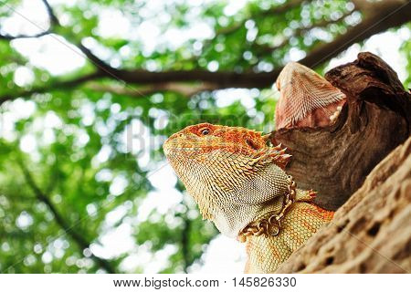 chameleon animal  exotic nature colors  background beautiful