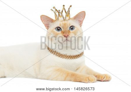 Close-up Beautiful Breed Mekong Bobtail Cat Blue eyed, Lying with Crown on Head, Isolated White Background, Color-point Fur