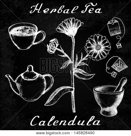 Calendula hand drawn sketch botanical illustration. Utensils for tea. Vector illustation. Medical herbs. Effect of chalk board. Grunge background