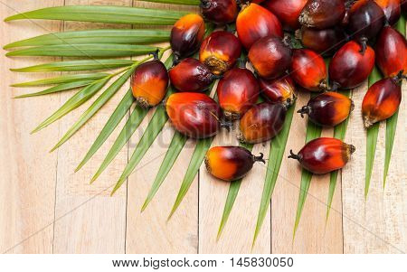 Commercial palm oil cultivation. Since palm oil contains more saturated fats than oils made from canola corn linseed soybeans safflower and sunflowers it can withstand extreme deep-frying heat and resists oxidation. its use in food has increased as food-l