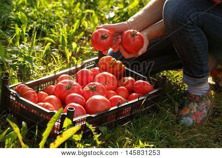 Woman Holding A Tomato