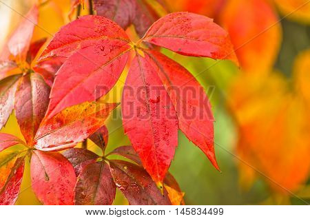 Colors of autumn on yellow, orange and red leaves in a park