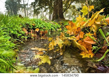Small water stream with some yellow fallen leaves at autumn