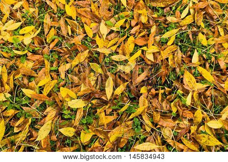 Autumn carpet of yellow and orange leaves on a green grass in a park