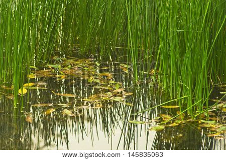 Small pond with green grass and yellow fallen leaves at autumn