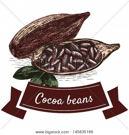 Vector colorful illustration with cocoa beans. Illustration of cocoa beans on white background