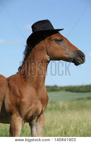 Amazing Foal With Hat On Pasturage