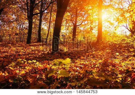 Autumn landscape with trees in sun rays