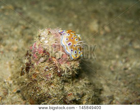 closed up the nudibranch in Myanmar divesite
