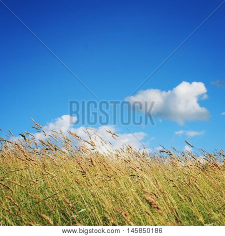 Meadow And Grassland. Deep Blue Sky. Kenozero Park