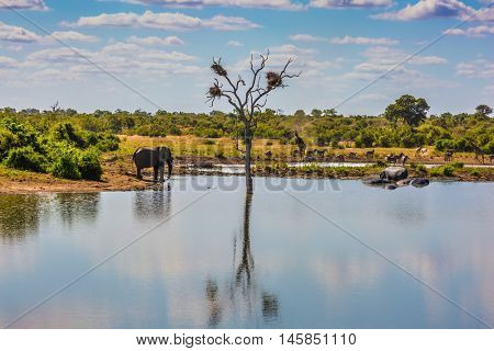 Small lake, to which the animals go to drink. Elephant herd of zebras and a few giraffes. In the water, resting hippos. The famous Kruger National Park