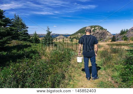 Rear view of a man carrying a container walking into Cupid's Haven to pick blueberries.