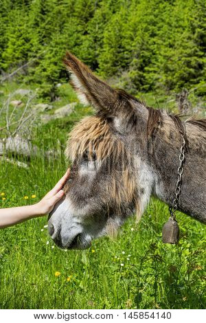 Boy hand caressing a beautiful donkey close up