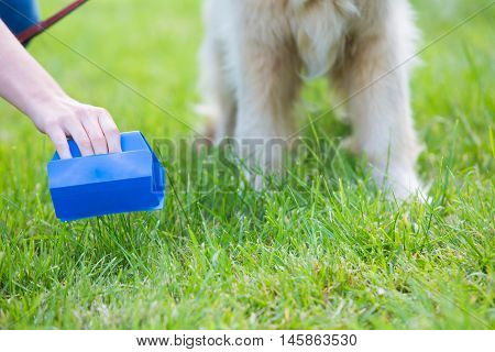 Owner Clearing Dog Mess With Pooper Scooper
