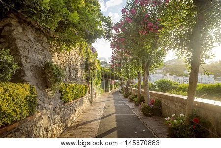 Beautiful alley full of trees and flowers on Capri Island Italy
