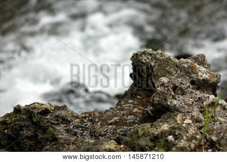 Roccia con muschio sul fiume in movimento