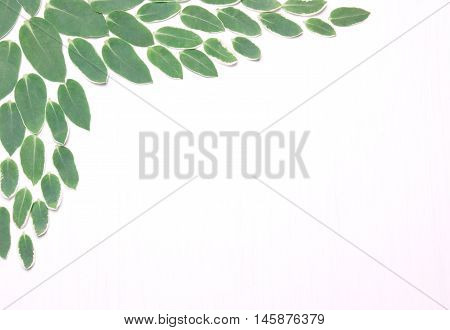 Composition from green leaves on a white background. The pattern the composition of the plant.View above