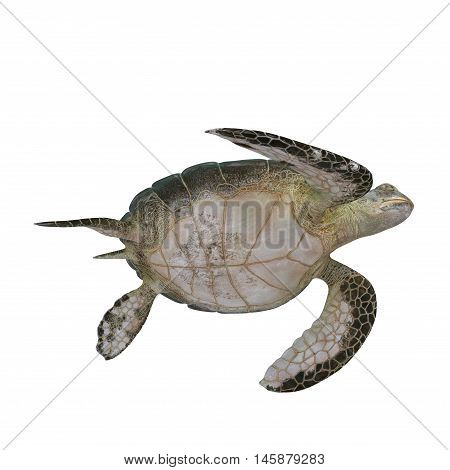 Green sea turtle isolated on a white background 3D Illustration